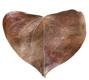 Dry leaf heart shaped. Valentine`s Day concept. Protection of environment concept Royalty Free Stock Photography