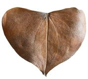 Dry leaf heart shaped. Valentine`s Day concept. Protection of environment concept Stock Photo