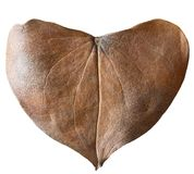 Dry leaf heart shaped. Valentine`s Day concept. Protection of environment concept Stock Image