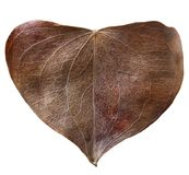 Dry leaf heart shaped. Valentine`s Day concept. Protection of environment concept Stock Images