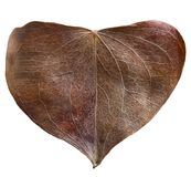 Dry leaf heart shaped. Valentine`s Day concept. Protection of environment concept Stock Photography