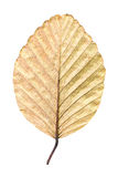 Dry leaf isolated Royalty Free Stock Photos