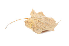 Dry leaf Stock Image