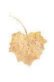 Dry leaf. Isolated on a white Stock Photo