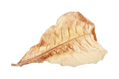 Dry leaf isolated on white Stock Photos
