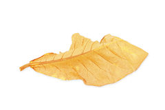 Dry leaf isolated on white Royalty Free Stock Photography