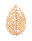 Dry leaf isolated on white Royalty Free Stock Images