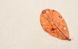 Dry leaf laying on sand beach Stock Photo