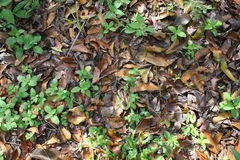 Dry leaf. Dry leaves that fall on the ground and grass Stock Image