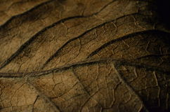 Dry Leaf Macro. A macro shot of a dry leaf royalty free stock image