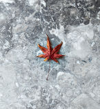 Dry leaf on a marble background Royalty Free Stock Photos