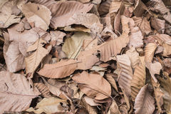 Dry leaf for nature background. Dry leaf in fall season nature for background and texture Stock Photos