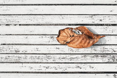 Dry leaf on old white wood Stock Photography