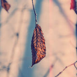Dry Leaf On A Branch Royalty Free Stock Images