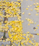 Dry leaf pattern detail Stock Image