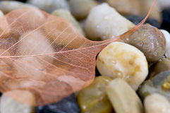 Dry leaf on pebbles Royalty Free Stock Photo
