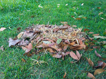 Dry leaf pile on green grass. On ground Royalty Free Stock Photo