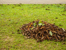 Dry leaf pile Royalty Free Stock Image
