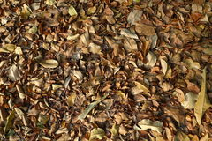 Dry leaf that pile up Stock Photo