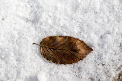 Dry leaf placed  on a white snowy background Royalty Free Stock Images