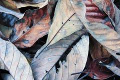 Dry leaf Stock Image