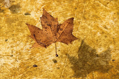 Dry leaf in pond Stock Image