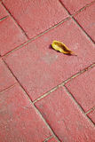 Dry leaf and red brick floor Royalty Free Stock Photo