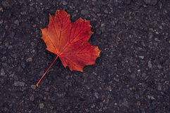 Dry leaf on the road Royalty Free Stock Photos