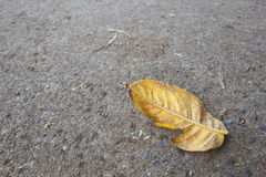 Dry leaf on the road Stock Photo