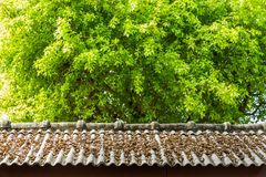 Dry leaf on roof top Royalty Free Stock Photos