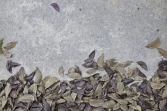 Dry leaf on rough cement floor background Stock Photo