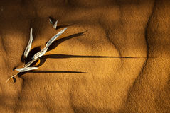 Dry leaf Sand shadows Stock Image