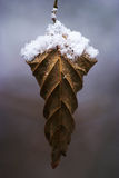 Dry leaf with snow Royalty Free Stock Photos