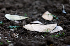 Dry leaf on soil. Shallow depth Dry leaf on soil Royalty Free Stock Photography