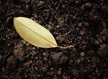 Dry leaf on soil. Yellow dead leaf on soil Stock Photos