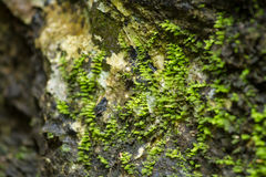 Dry leaf on stone with green mos. Stock Photo