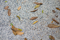 Dry leaf on stone ground Stock Image