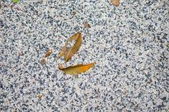 Dry leaf on stone ground Stock Photos