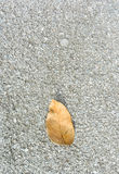 Dry leaf on stone Stock Images