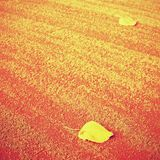 Dry leaf an tennis court. Dry light red crushed bricks surface. Dry leaf on tennis court royalty free stock image