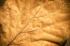 Dry leaf Royalty Free Stock Images