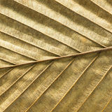 Dry leaf texture background Royalty Free Stock Image