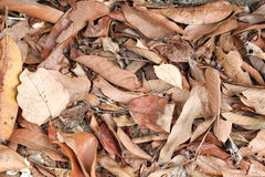 Dry leaf texture background in nature.  Royalty Free Stock Images