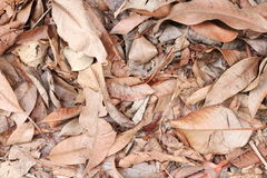 Dry leaf texture background in nature.  Stock Photography