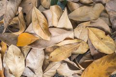 Dry leaf texture background Royalty Free Stock Photography