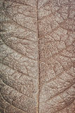 Dry leaf texture background Stock Photos