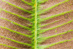 Dry leaf texture Royalty Free Stock Photo