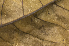 Dry leaf texture royalty free stock photography