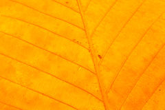 Dry leaf texture. For pattern background Stock Photo
