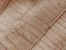 Dry leaf texture Stock Photo